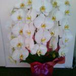 8月にデイサービス開業、お祝いのお花を頂きました