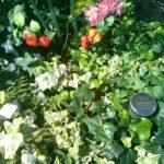 デイサービスここけあ練馬豊玉では、庭師さんに依頼をして園芸療法の準備中です